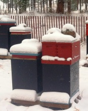 Double nucs wintering